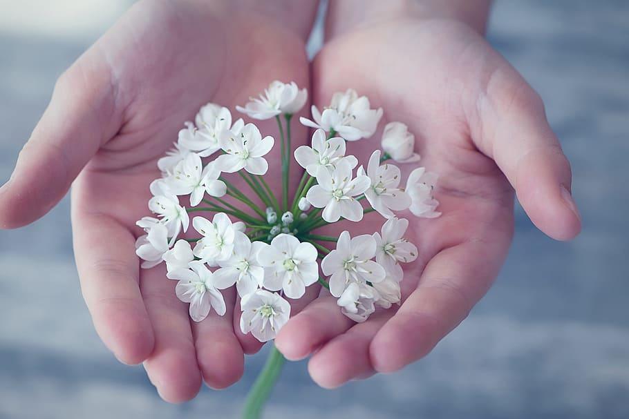 flower-flowers-small-flowers-white